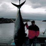 Rankin Tuna Charters - wharf tuna